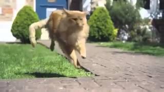Прикольные кошки   это самая улетная  реклама!!  Забавно смотреть!!
