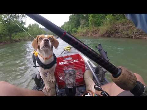 Big Sugar Creek Missouri 2017 Memorial Float Smallmouth Bass
