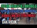 Simulasi Lomba Cucak Ijo  Mp3 - Mp4 Download