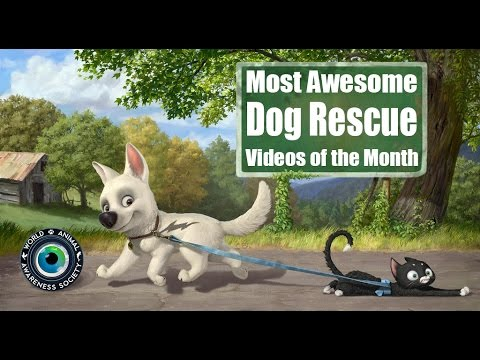 Hope For Paws: Best Dog Rescue Videos of the Month Compilation with Links