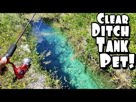 Ultra CLEAR Ditch Fishing For New TANK PET!!