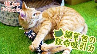 """[貓の執事 CatButler]手作""""纈草""""貓草包!貓執事ㄎㄧㄤ起來!"""