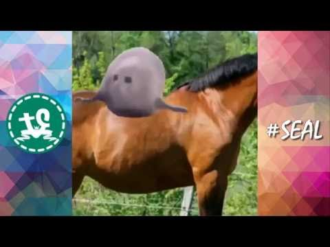 [ULTIMATE] Funny Seals/Sea Lions Vine Compilation (2016) || #Seal