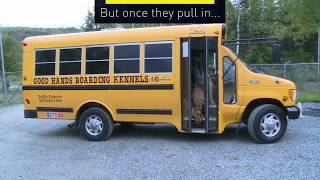 Dogs hop the bus to daycare