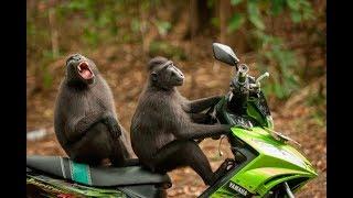 Выбраны самые смешные фото животных в 2017 году.