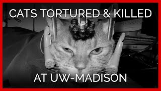 Cats Tormented and Killed at UW-Madison