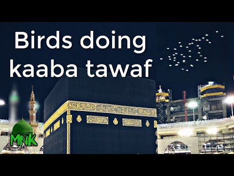 Birds Doing Tawaf Around The Kaaba    March 2020  
