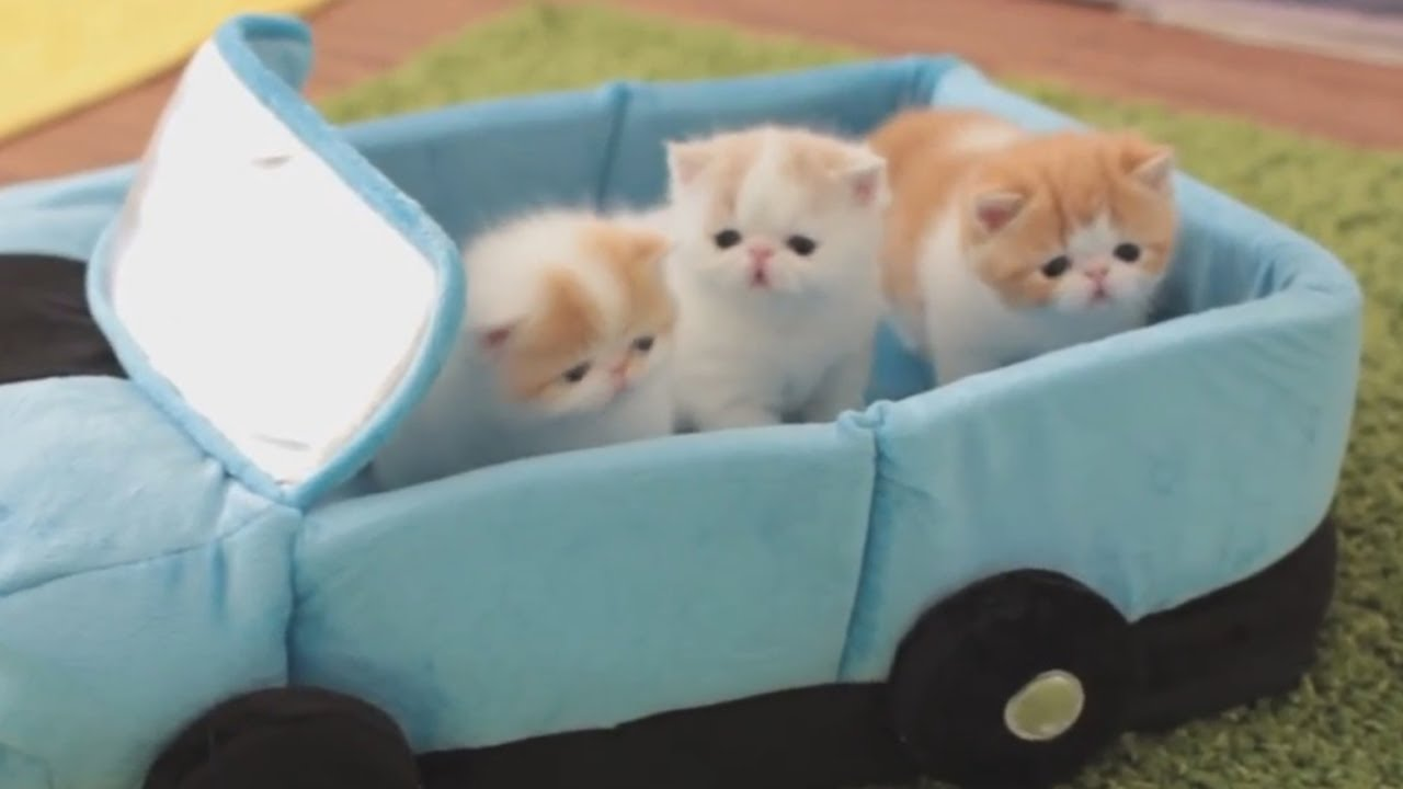 кошек и котят смотреть