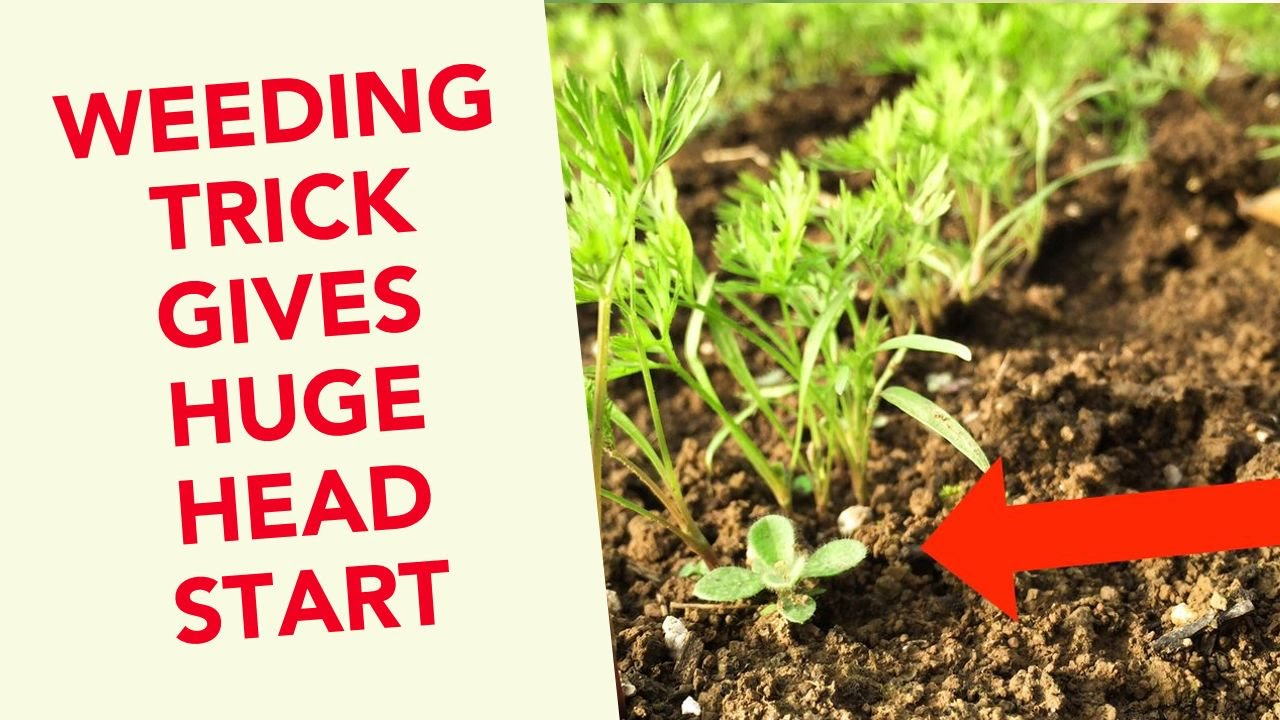 This Simple Weeding Trick Gives Plants a HUGE Head Start How to