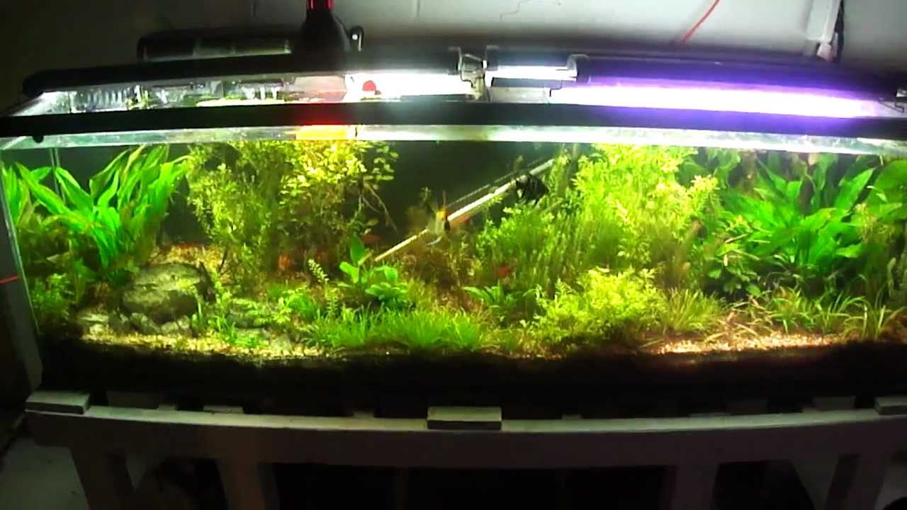 125 gallon planted tank update youtube for 125 gallon fish tank
