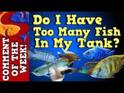 Do I Have Too Many Fish In My Tank? Comment Of The Week Episode 1