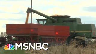 Nebraska Farmers Feeling Impact Of President Donald Trump's Trade War | Velshi & Ruhle | MSNBC