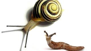How To Fight With Slugs & Snails - آموزش مبارزه با انواع حلزون