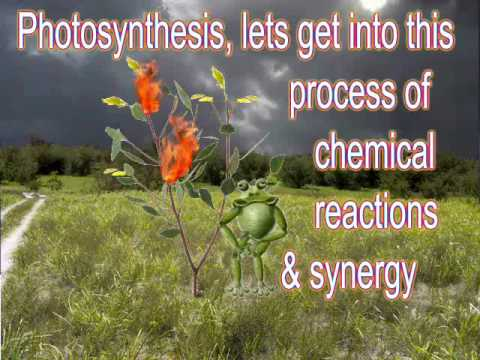 Raps about photosynthesis with lyrics essay buy online