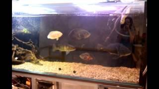 Интерактивный аквариумный туризм №19(Рубрика, куда вы присылаете свое видео и описание аквариума, а мы делаем из этого выпуск. Тема для Заявок:..., 2014-12-30T04:46:11.000Z)