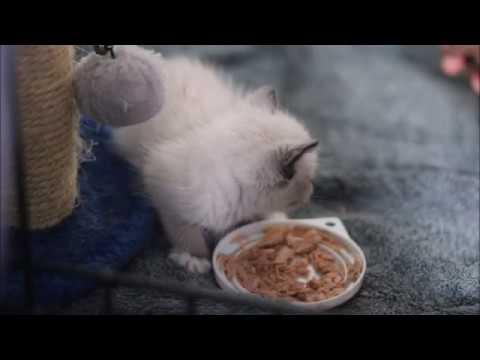 CAA Kittens Special 18