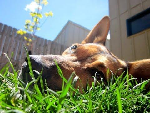 Black Dog Animal Rescue - Cheyenne, Wyoming