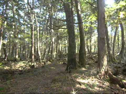 "Hiking in the ""Suicide Forest"", Aokigahara Jukai in Japan 青木ヶ原樹海"