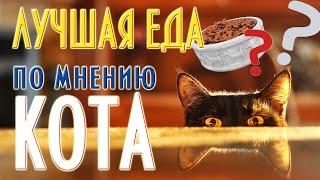 Еда для кота. Часть 1.