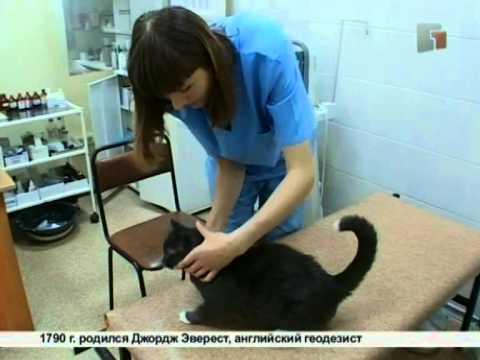 Вопрос: Болеют ли кошки раком?