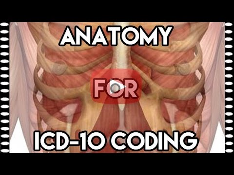 ICD-10-CM Draft & ICD-10 Anatomy Medical Coding - YouTube