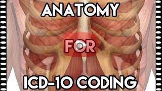 icd 10 cm draft icd 10 anatomy medical coding