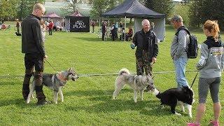 Выставка собак охотничьих пород в Эстонии