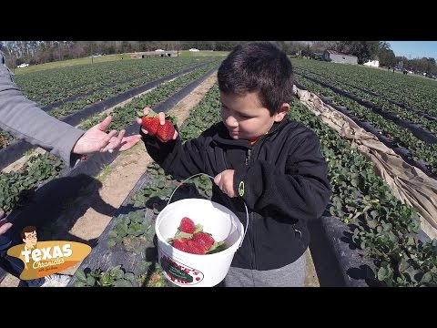 "Texas Chronicles: Have a ""Berry"" Nice Day at Froberg's Farm"