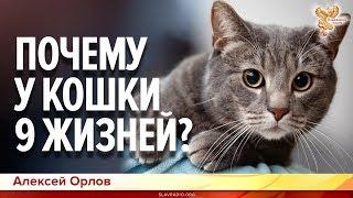 Почему у кошки девять жизней? Алексей Орлов