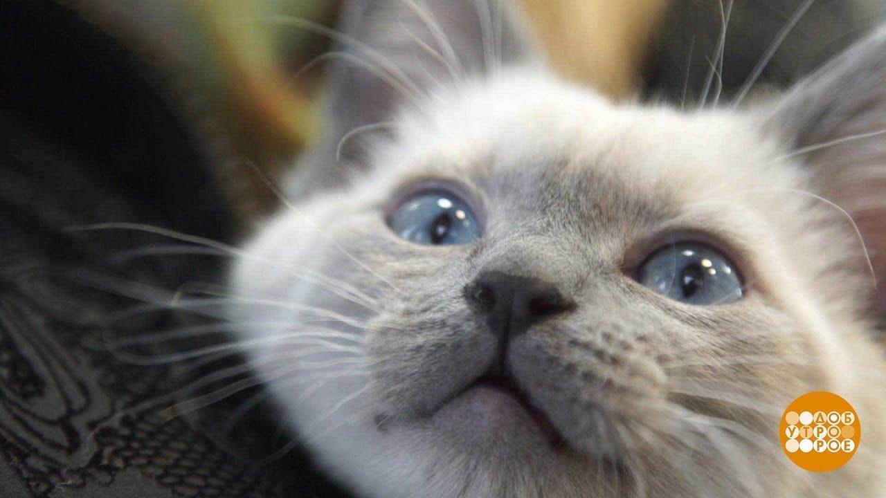 Лучшие заводчики предлагают купить мейн-кунов по самой. Если вы захотели купить котенка мейн-кун, то вы наверняка сделаете. Краснодар ул.