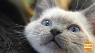 Без кота— никуда! 18.01.2017