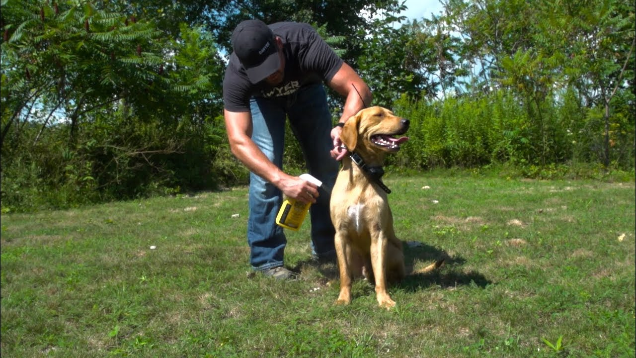 Permethrin Insect Repellent Treatment for your Dog   Sawyer