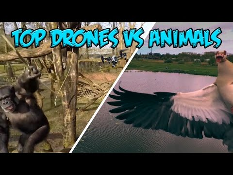 Top Animals vs Drones Compilation - Extended