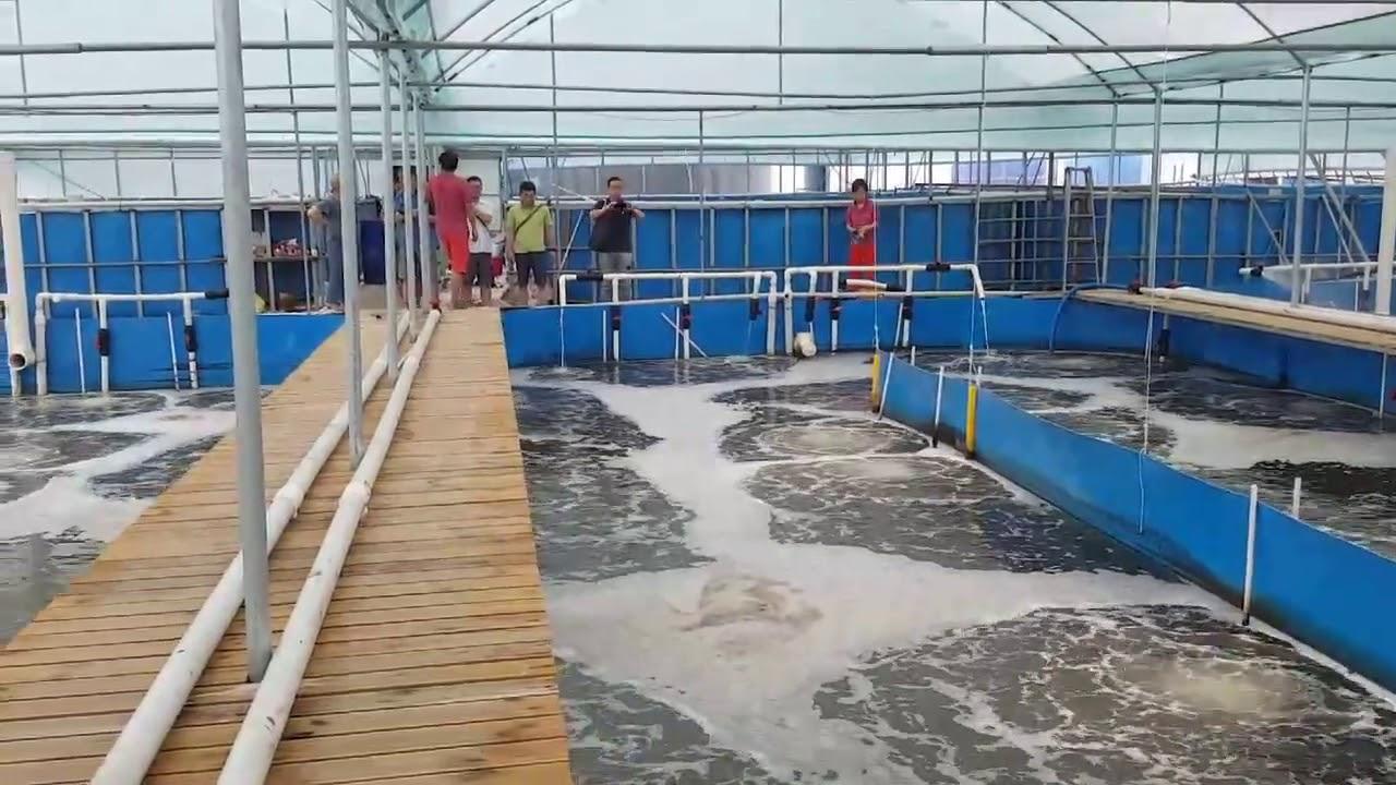 Vannamei 101 Super intensive indoor shrimp culture farms