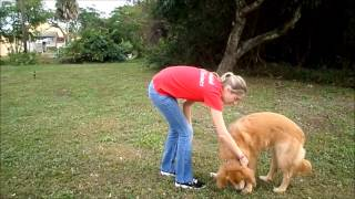 Camp Bow Wow Naples Behavior Buddies Presents: Dani's Dog Tips: Benefits Of Trick Training