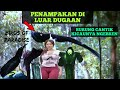 Burung Catik Kicau Unik Birds Of Paradise Burung Langka  Mp3 - Mp4 Download