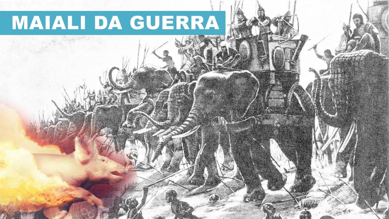 I MAIALI da GUERRA: l'Arma di Difesa Romana contro gli Attacchi degli Elefanti