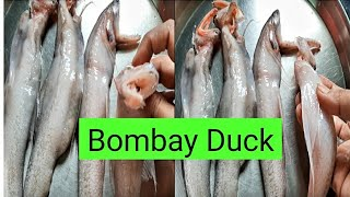 ओला बोंबील॥ Bombay duck॥how to clean at home॥