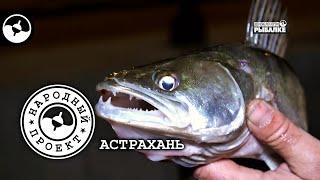 Судак на джиг. Ночная рыбалка. Астрахань | Народный проект