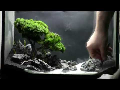 Bonsai Aquarium   Acquario Bonsai   Step by Step