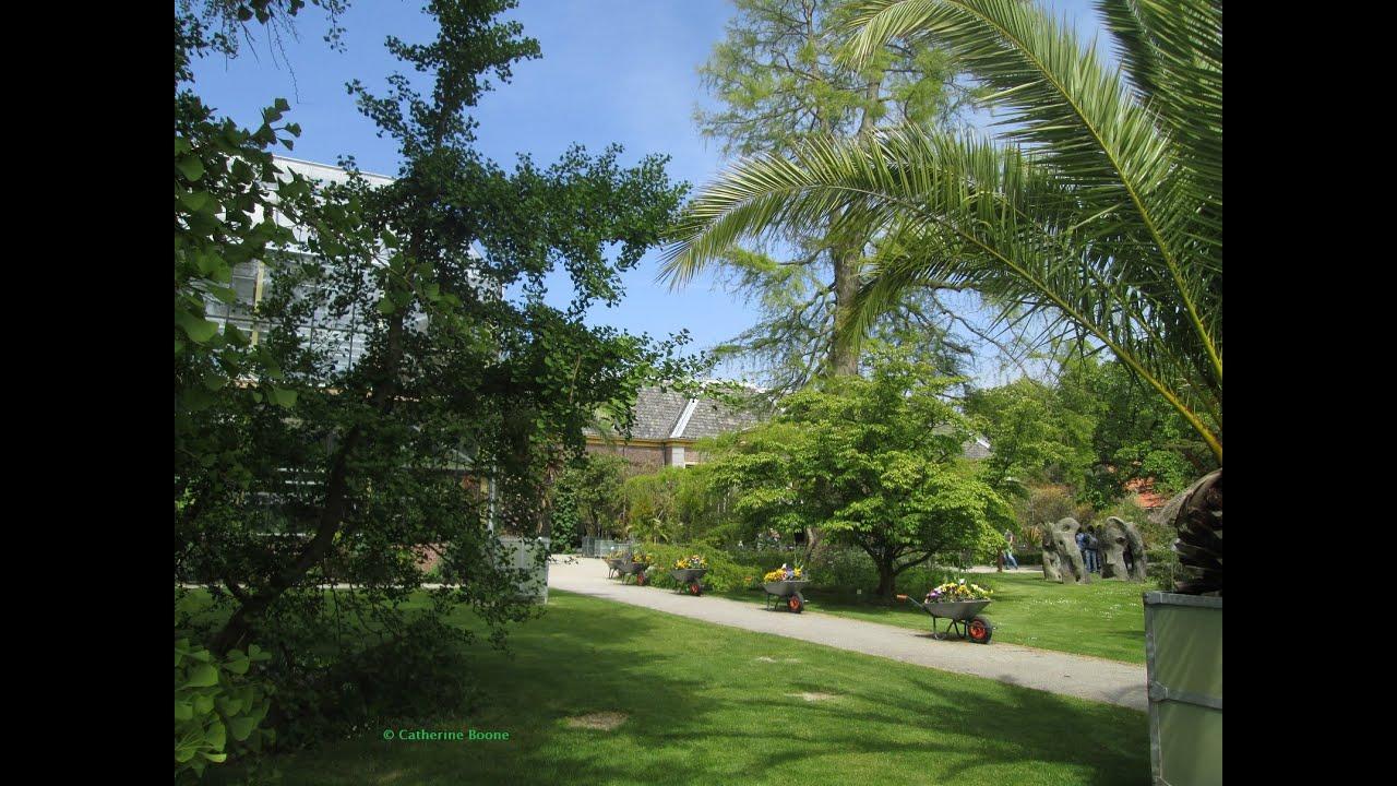 Botanische Tuin Leiden : Leiden hortus botanicus leiden door catherine boone youtube