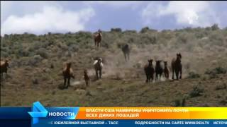 Власти США намерены уничтожить почти всех диких лошадей