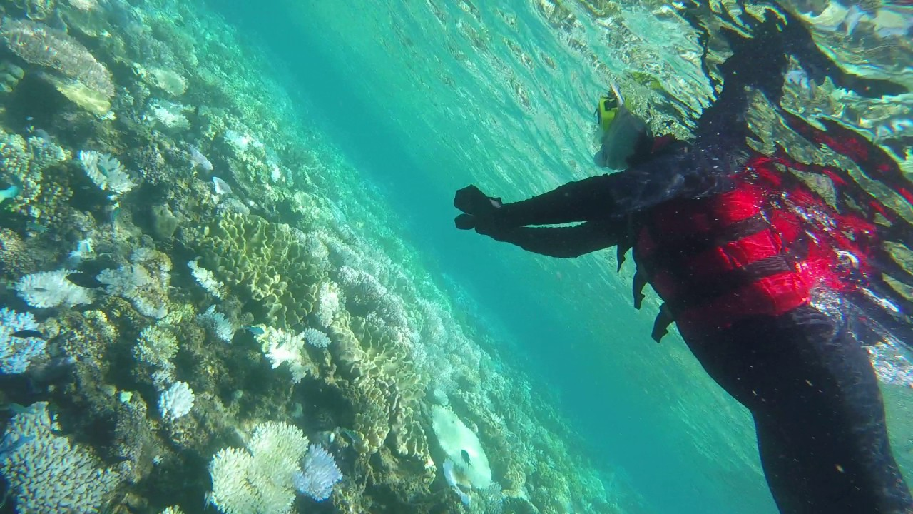 Snorkeling With Virginia Part 1