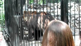 Самый большой медведь Новосибирского зоопарка.