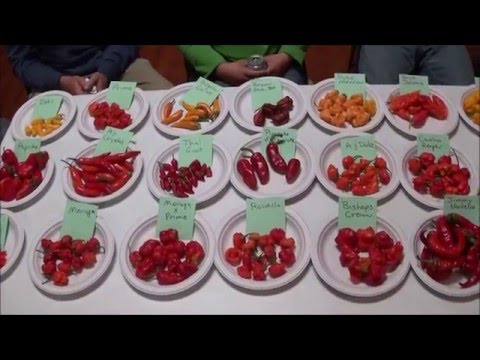 Hawk Hollow Hot Pepper Eating Contest - 2015