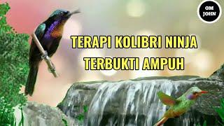 pancingan Kolibri ninja macet bunyi plus suara gemericik air, terbukti Ampuh Bro