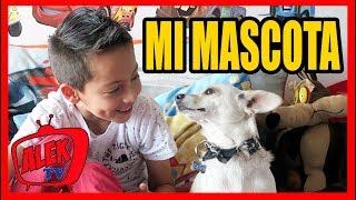 MI MASCOTA | AlekTV
