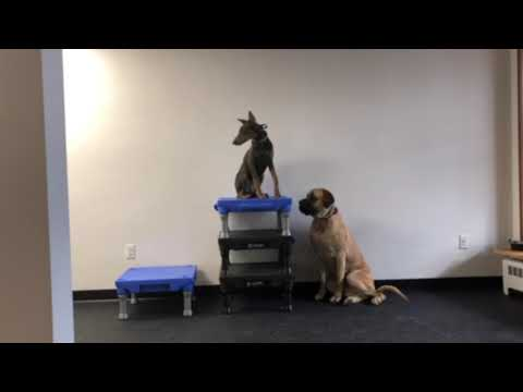 Best Allentown Dog Trainers ||| Sam and Chevelle, Sit and Place Commands