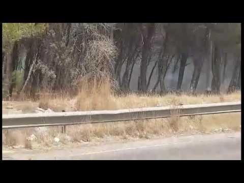 Fiamme sulla Provinciale Gallipoli-Alezio. IL VIDEO