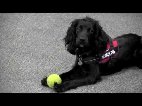 SARSS Charity Fire Investigation Dog Handler Team, Jane and Sydney